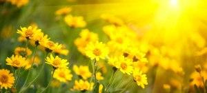 Springtime_Sniffles